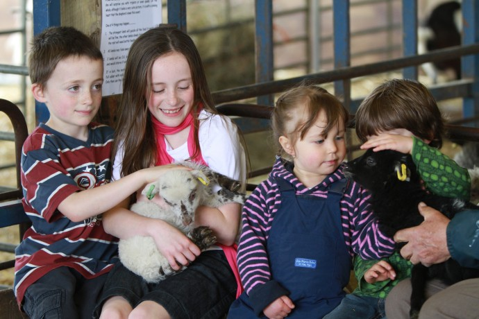 Children holding and petting the new lambs