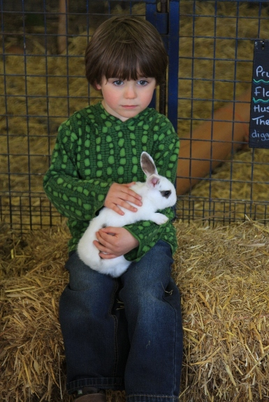 A little boy stroking a tame rabbit in the petting pens