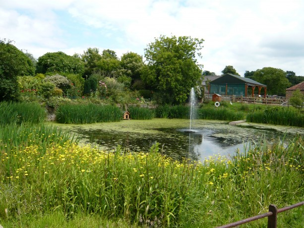 View of the pond at Church Farm with flowers and a water spout