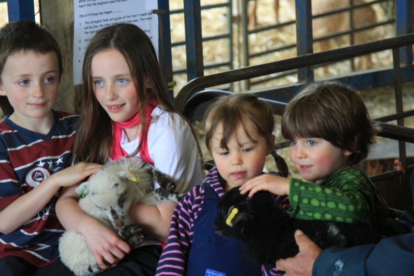 Children holding the petting lambs in spring