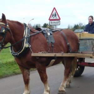 Bernard our Suffolk Punch pulling Elise in his cart