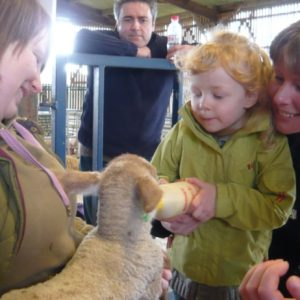 A child bottle feeding the orphan lambs