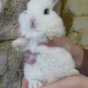 A fluffy white baby rabbit born in spring