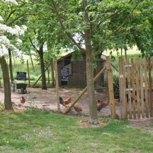 Chicken coup - with farmyard chickens